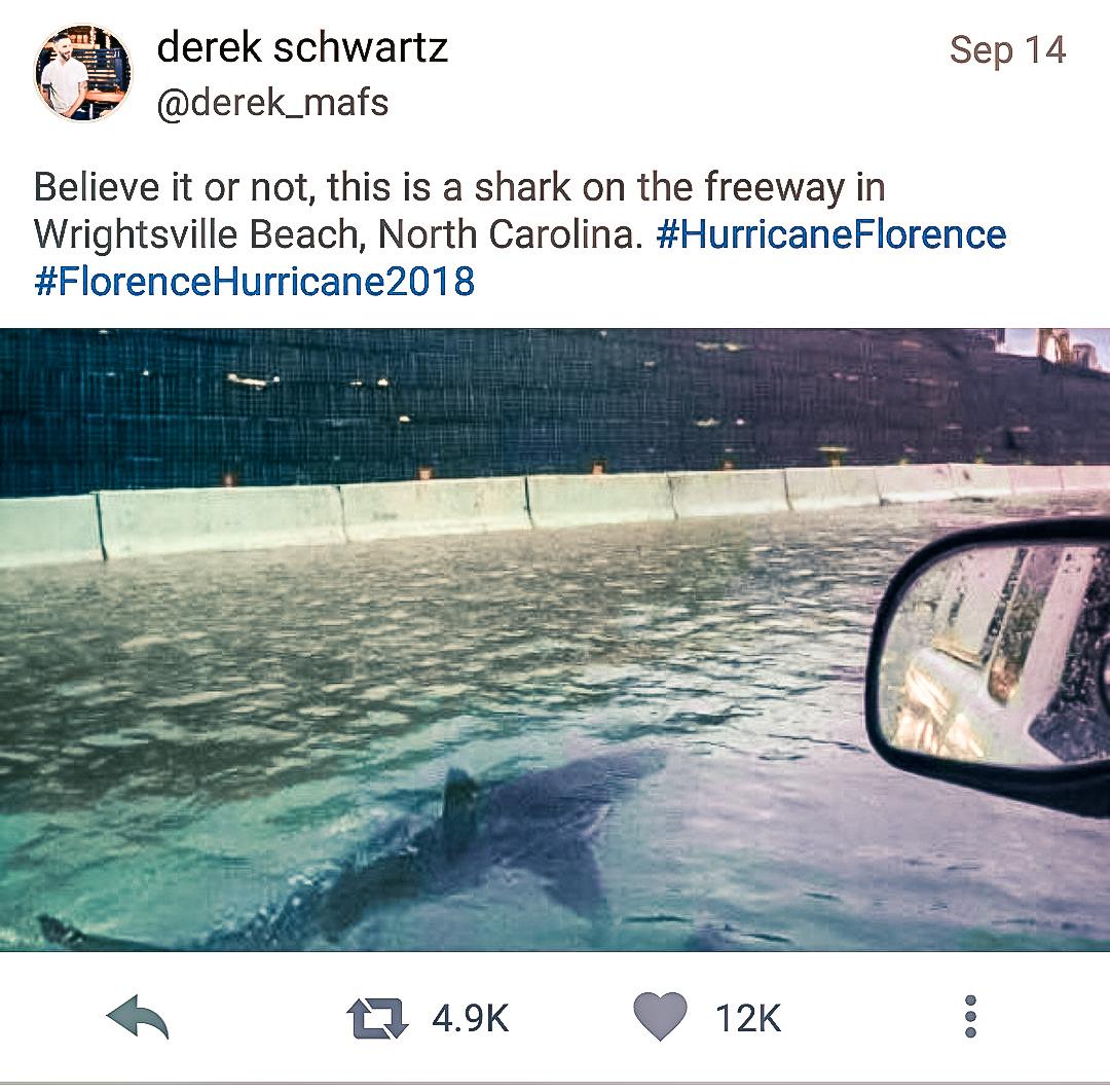 Sharks on NC Highway
